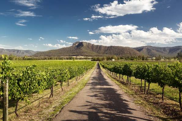 Hunter Valley Vineyards New South Wales Australien